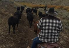 ranching_man