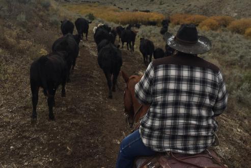 ranching_man